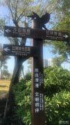 红树景园实景图