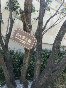 北京城建・龙樾华府
