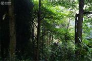 玉屏山森林度假酒店外景图