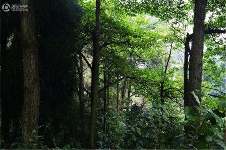 玉屏山森林度假酒店