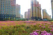 紫金城实景图
