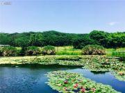 鹭山湖乐活岛实景图