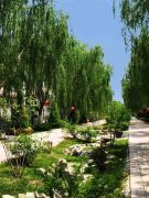 薇乐花园外景图